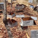 Envenenan abejas y roban la miel en área rural de Ciénaga, Magdalena