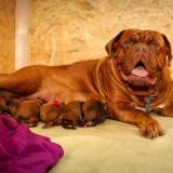Los médicos veterinarios recomiendan adecuar un espacio del hogar que se mantenga fresco y sea acogedor para la perra y sus cachorros.