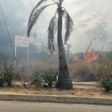 Bomberos controlan incendio forestal en el Corredor Universitario