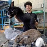 Estudiante mexicano cría los conejos más grandes del mundo