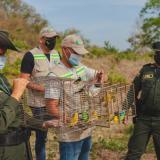 Liberan animales silvestres en Cartagena que iban a vender en Semana Santa
