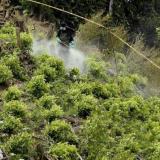 Anla modifica el Plan de Manejo Ambiental en la erradicación con glifosato
