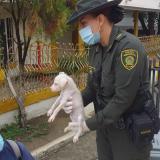 Rescatan 16 perros desnutridos en vivienda de Cartagena