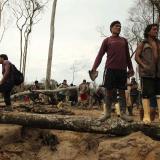 Pandemia agrava deforestación de la Amazonía