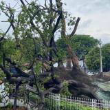 Fuertes lluvias tumban la bonga de Corpamag en Santa Marta