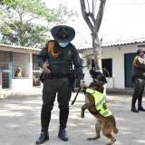 Caninos antinarcóticos: el poderoso olfato contra el crimen