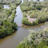 Ciénaga Grande: intervendrán 3 caños para recuperar el manglar
