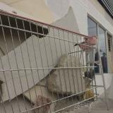 Balance de capturas y actos vandálicos por parte de la Policía
