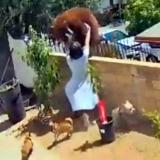 Mujer empujó a una mamá osa para rescatar a sus perros