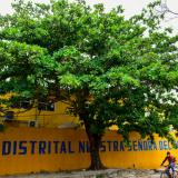 La discordia por la tala de un árbol en un colegio público