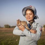 """Magawa, una rata """"buscaminas"""" que se jubila tras cinco años de trabajo"""