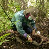 Abren convocatoria para investigación de la biodiversidad