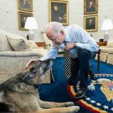 Muere Champ, uno de los pastores alemanes de los Biden