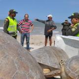 Extreman controles para evitar la caza de tortuga en La Guajira