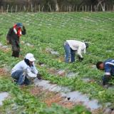 Promueven mercado campesino virtual para apoyar a productores de Sucre