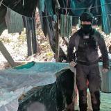 Destruyen complejo cocalero del ELN en Nariño