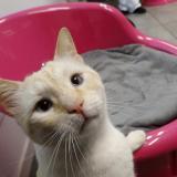 Los gatos pueden contraer la covid-19 por dormir en la cama de su dueño