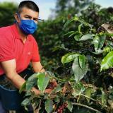 Exportaciones de café de Colombia cayeron 11% en junio