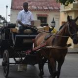 Piden a Umata número y estado actual de caballos usados en coches en Cartagena