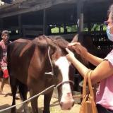 Buscan albergue para animales usados en coches turísticos de Cartagena