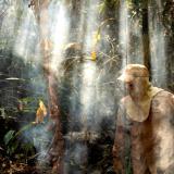Destrucción de la Amazonía pone en jaque seguridad climática