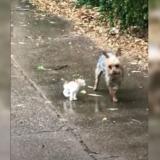 Hazel, la perrita que salió de su casa y volvió con un gato para ser adoptado