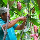Destinan recursos para apoyar a productores de cacao en Valencia