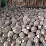 Más de mil toneladas de ñame están a punto de perderse en Córdoba