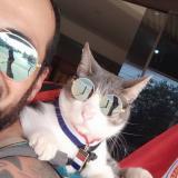 Murió el 'gato mochilero', mascota que viajaba por el mundo con un colombiano