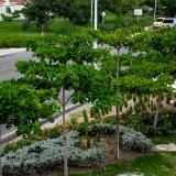 Más de 38 mil árboles se han sembrado en la ciudad, destaca Minambiente