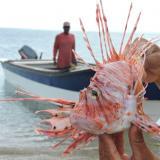 Buscan disminuir impacto del Pez León en Dibulla, La Guajira