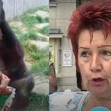 Zoológico prohíbe la entrada a mujer que aseguró tener una relación con chimpancé