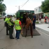 Capturan a hombre por maltrato a un caballo en La Alboraya
