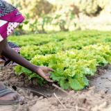 Huertos urbanos: alternativa medioambiental para combatir el hambre