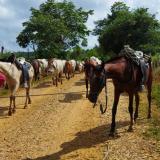 Fedegán alerta por difícil situación que viven ganaderos de La Mojana