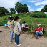 Denuncian tala de árboles en un barrio de Cartagena