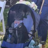Encantador gato fue el padrino en una boda y conquistó las redes sociales