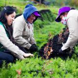 Abren convocatoria por $8 mil millones para emprendimiento femenino