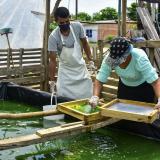 Espirulina, otra oportunidad de negocio en Galapa