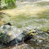 Liberan 135 especímenes de fauna silvestres en el Cesar