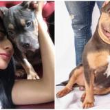 Millonaria multa a Easyfly por muerte del perro 'Homero' que obligó a llevar en bodega