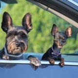 Mascotas serán consideradas como hijos en procesos de divorcio en España