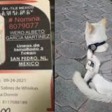 """Curiosa historia: empresa adoptó un gato y lo """"contrató"""" como vigilante"""
