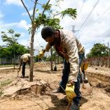 Día del Árbol: la necesidad de sembrar conciencia ambiental