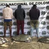 Incautan 41 tortugas que eran transportadas a Maicao para ser sacrificadas