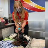 Tierno polizón: descubrió a su perro dentro de una maleta antes de subir al avión