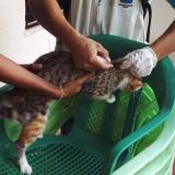 Confirman caso positivo de rabia animal en Sucre