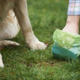 Heces de mascotas, más que un mal olor