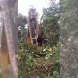 Levantan serpiente gigante con una grúa en isla de Dominica
