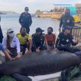 Capturan a los presuntos autores de la muerte de la manatí  'Julieta' en Santa Marta